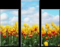 canvas pictures tulips