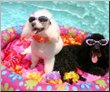 canvas pictures pool poodles