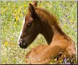 canvas pictures cheval 10