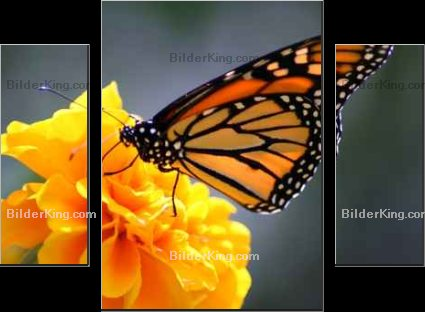 Print details - Ron Smith : monarch butterfly