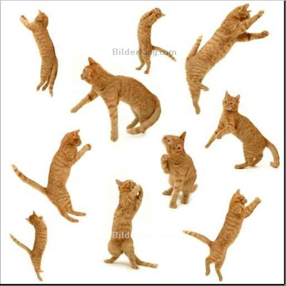 Print details - Lars Christensen : collection of kittens in action