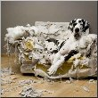 canvas pictures gentil le chienchien